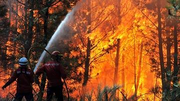 Waldbrandverordnung mit heute in Kraft!